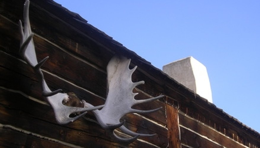 Trophy antlers are sometimes hung outside of the house.