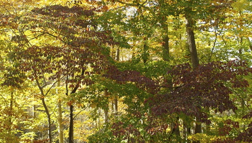 The Appalachian Mountains are home to one of the most diverse sustainable ecosystems on the planet.
