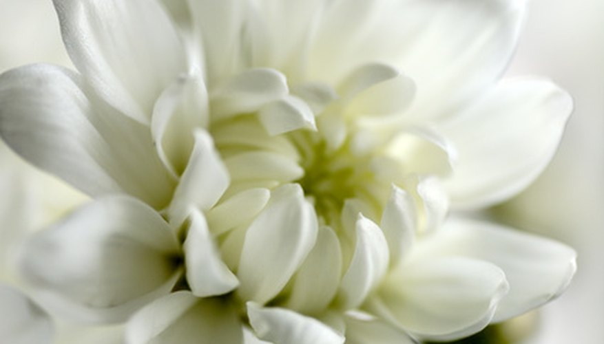 White represents the color of death in many Asian religions.
