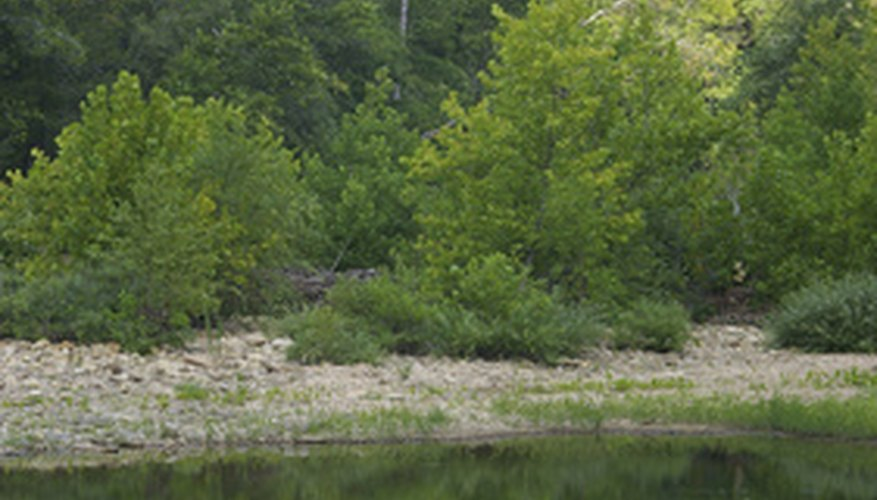 Attract fish to your chosen spot by throwing some attractant into the water.