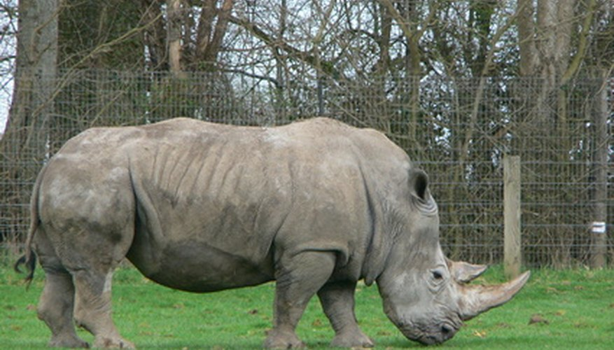 The Save the Rhino organization lists the rhino population at approximately 25,000.