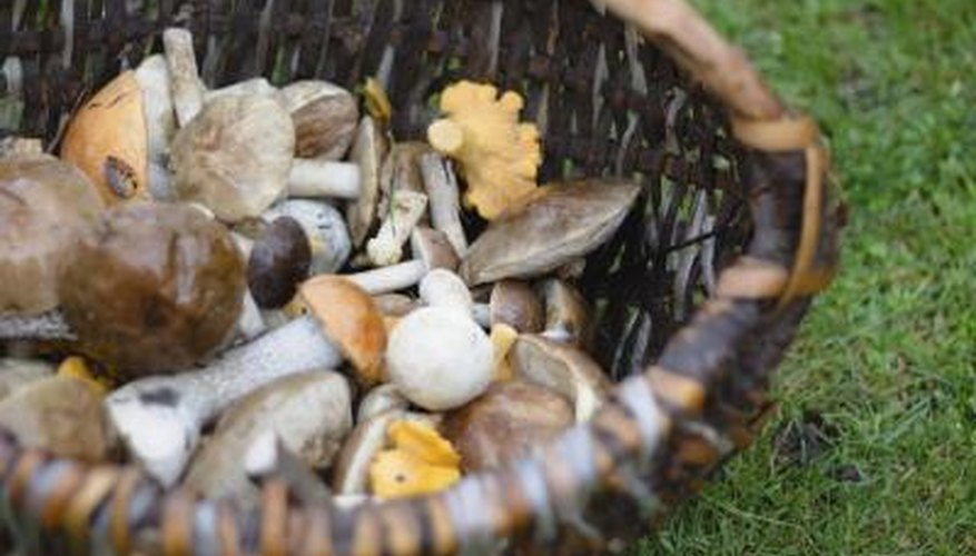 An assortment of edible mushrooms in a basket on the grass.