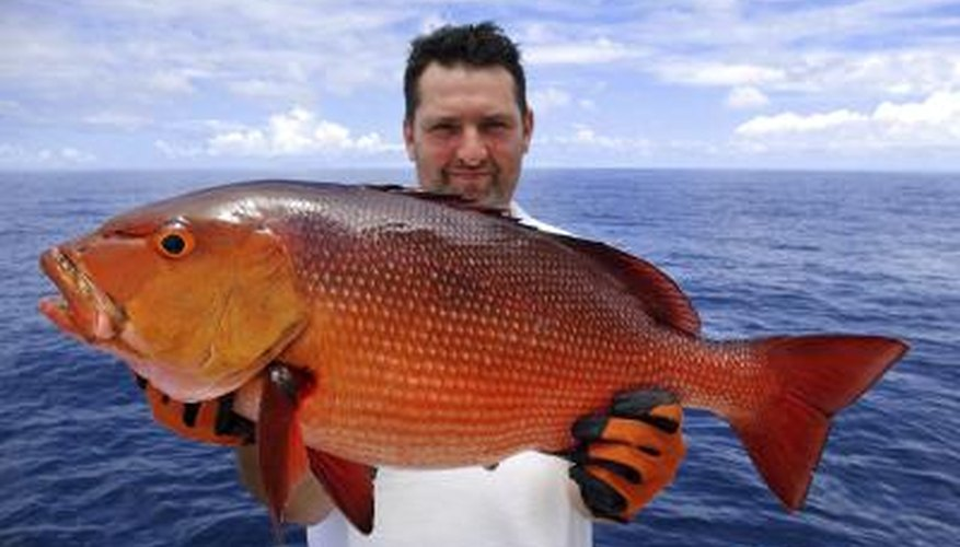 Fisherman holding a very large red snapper