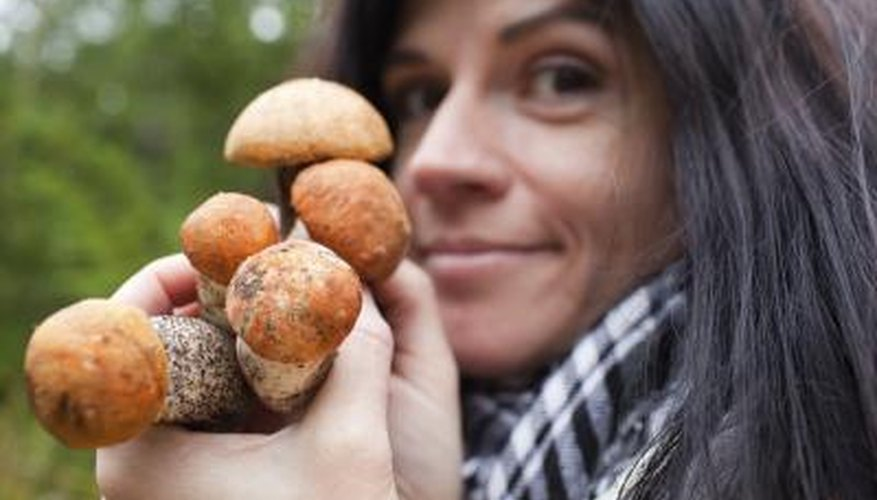 A woman holds a handful of boletes.