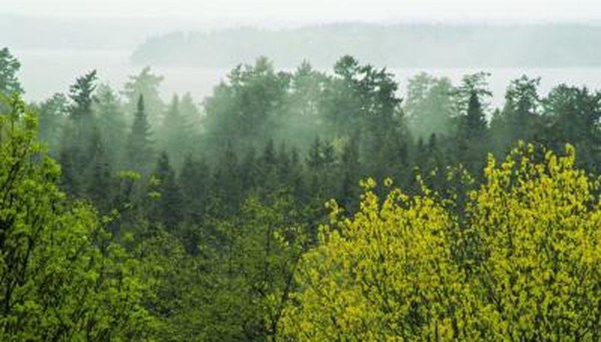 A wooded area on the coast of Oregon.