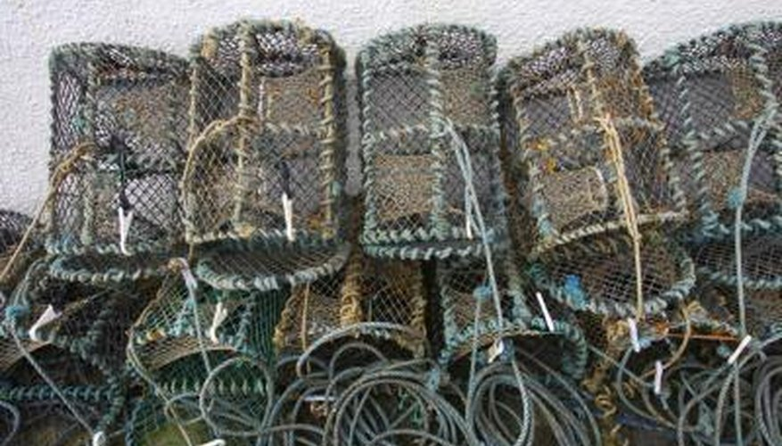 Fish traps are designed so that once fish swim in, they cannot swim out.