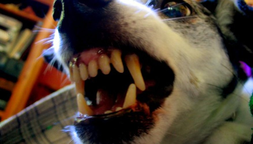 Dog bites can become infected.