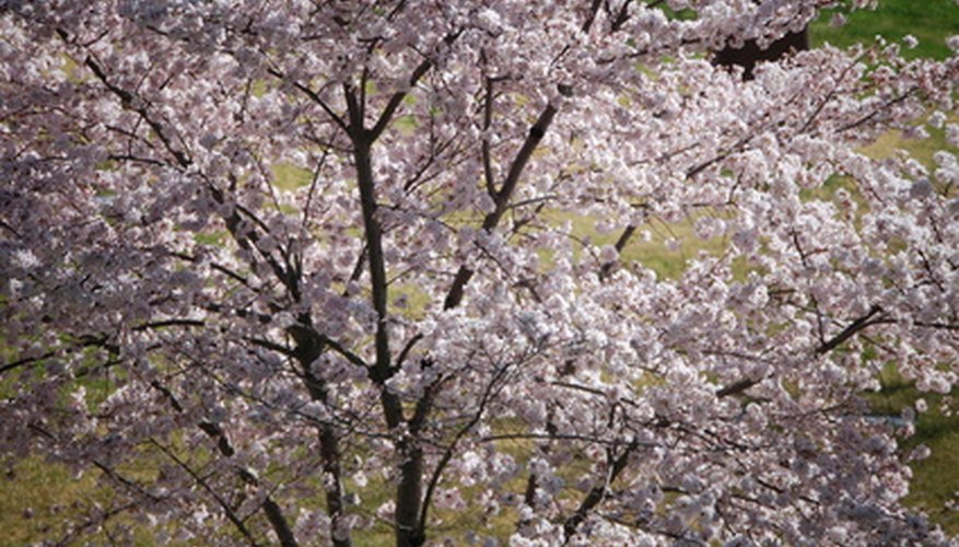 Dogwoods are a captivating sight.