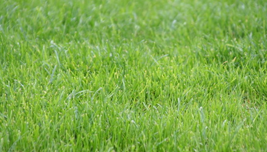 With a bit of preparation, your muddy yard can be green and lush with grass.