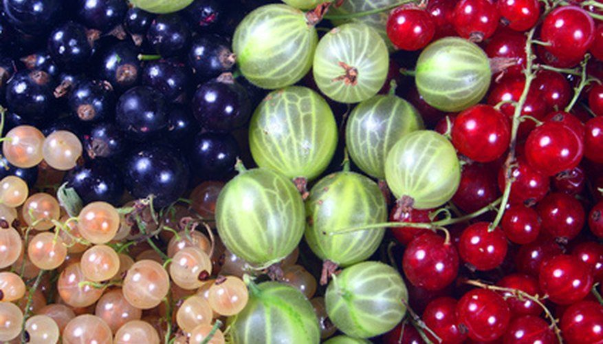 Currants and gooseberries grow in various colours and sizes.