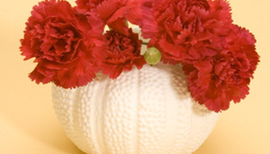 Red carnations symbolize admiration.