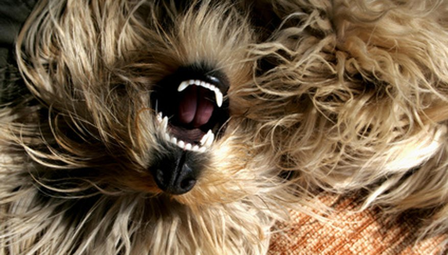 Pearly whites for your pup
