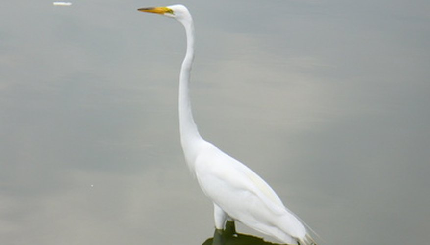 The crane is a familiar Japanese symbol of luck.