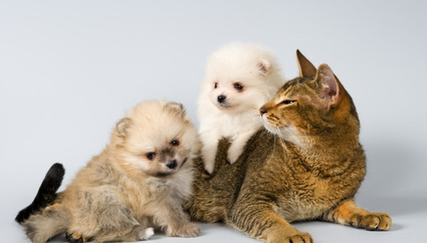 Young pets can have accidents while potty training.