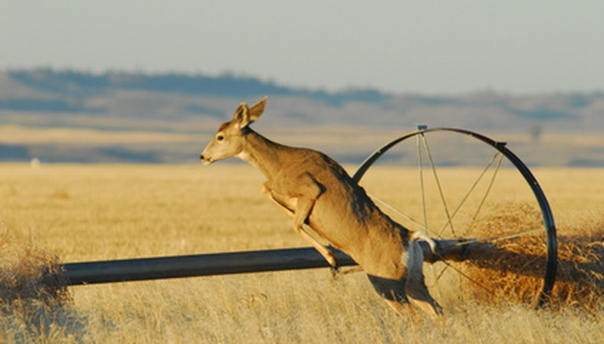 Deer use their strong legs to jump high distances.