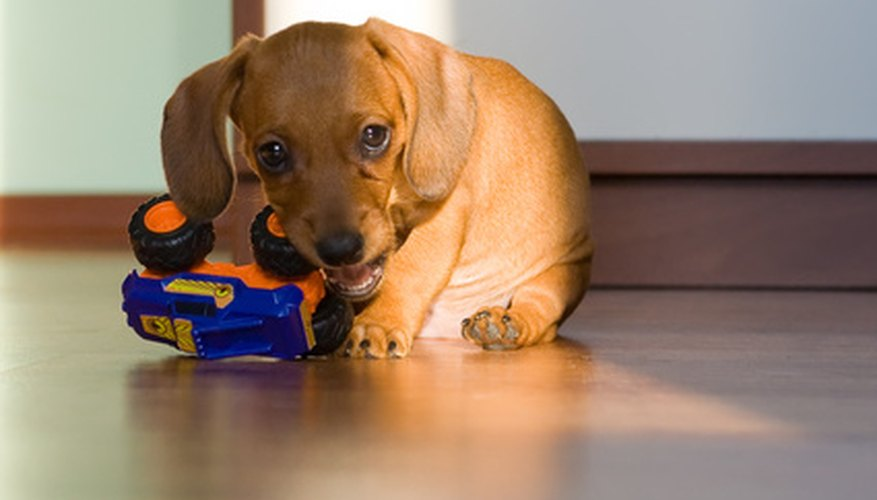 Keep your puppy healthy and free of worms.