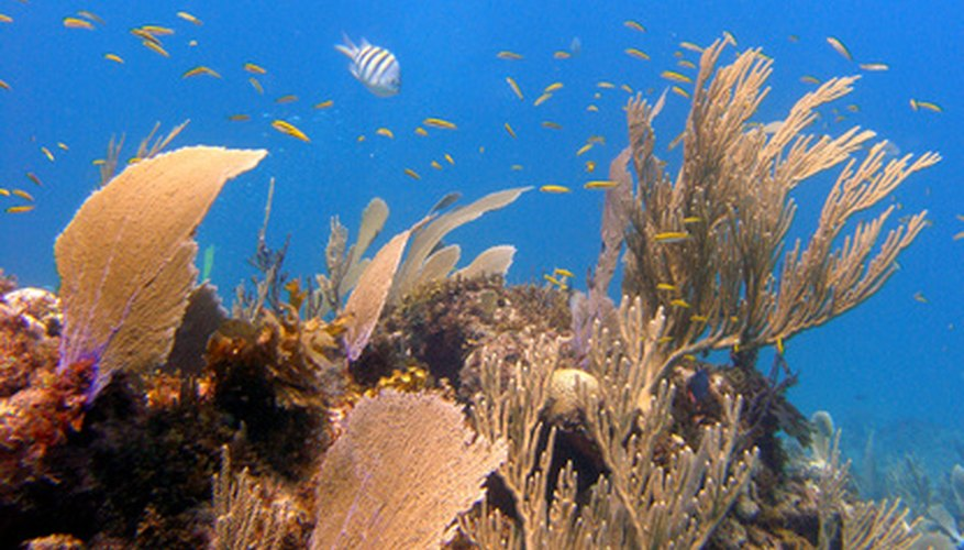 Some grants support conservation of ecosystems, such as coral reefs.