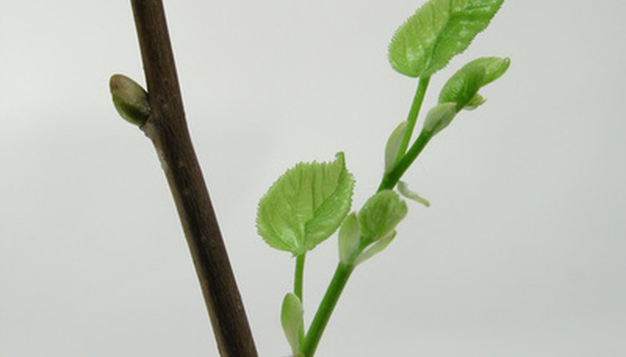 Transform a plain branch into a small tree.