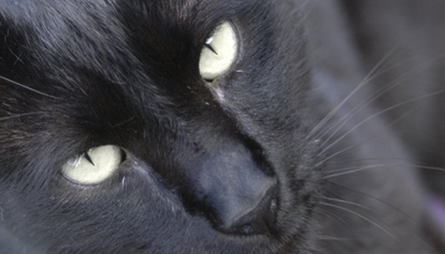 As with humans, most feline skin tags and moles are harmless.