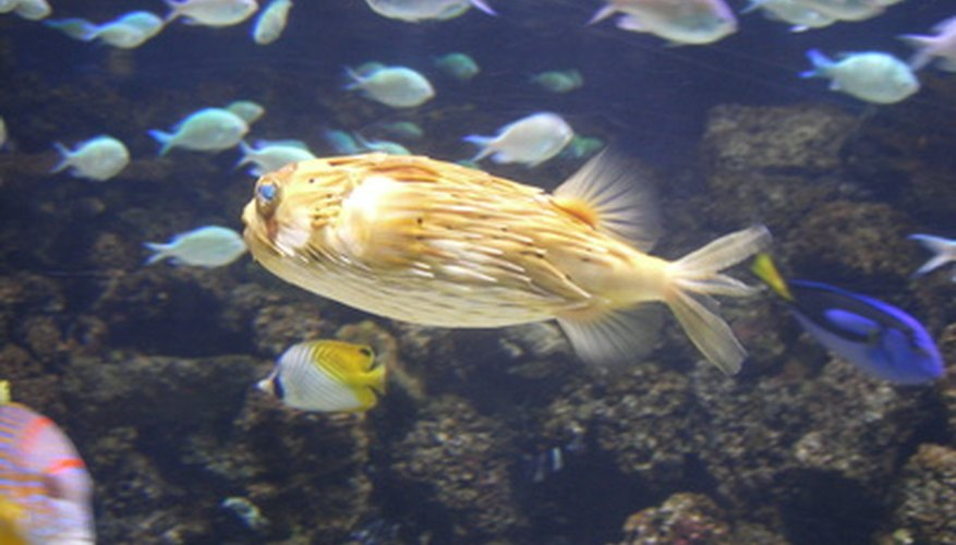 Three dimensional fish tank backgrounds are used in major aquariums as well as private homes.