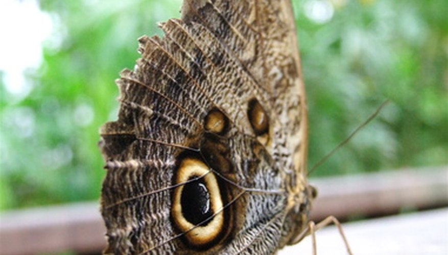 People attribute different meanings to a butterfly in the home.