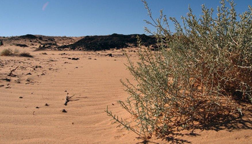 Snakes commonly hide under dense brush during summer months.