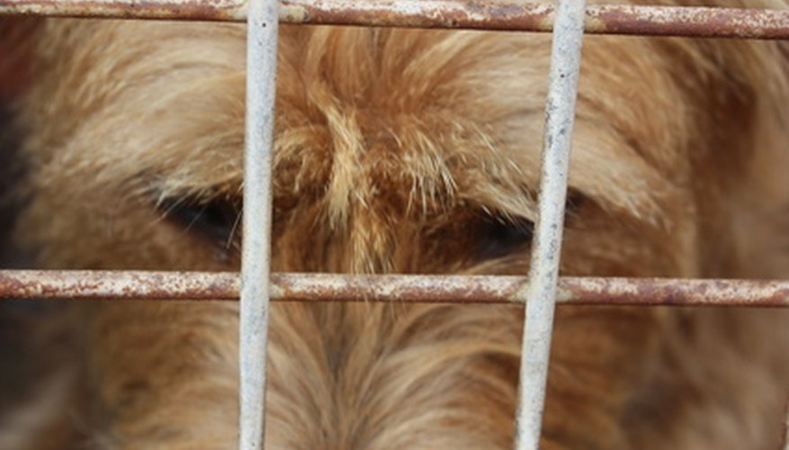 Your dog need not be uncomfortable when staying in a kennel.
