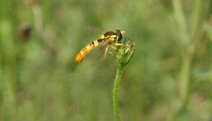 Wasps are parasidic stinging insects.