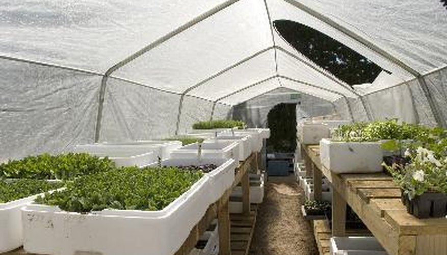 Greenhouses allow plants to grow even during winter.