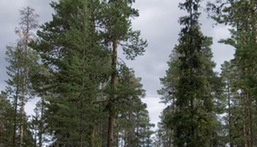 Boreal forests, less that 8 per cent of which are protected, are common lumber sites.
