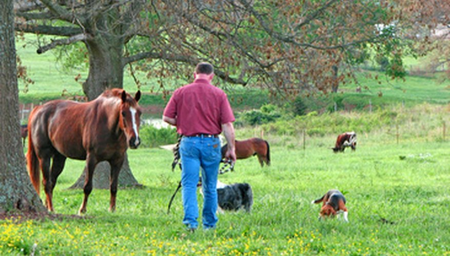 A farm theme can include people, animals or plants.