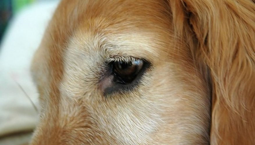 Make your own dog eye patch.