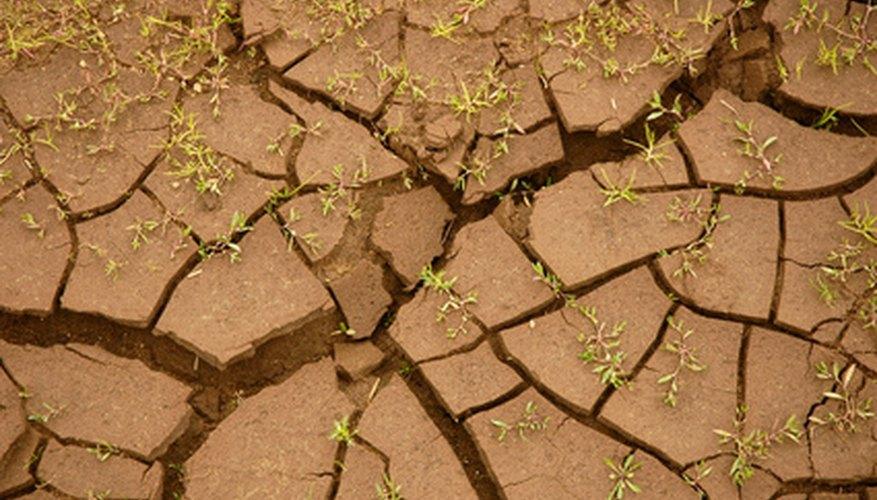 Consecuencias de la salinización del suelo