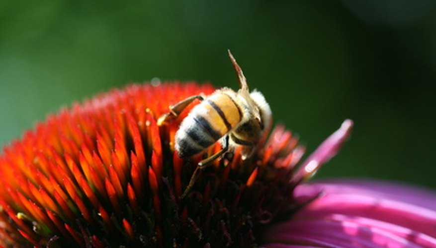 Honey bees have several adaptations that keep their species alive