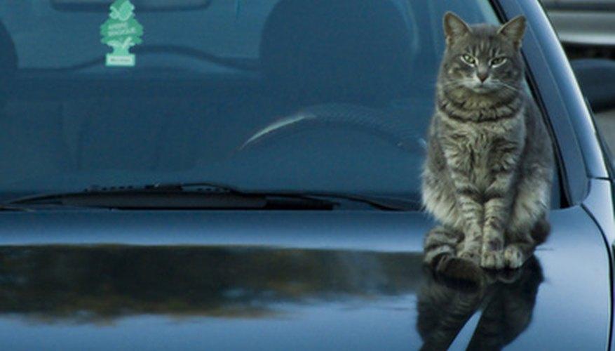 Buff out a cat scratch on a car.