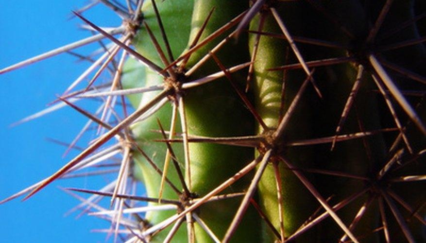 Desert plants develop different adaptations than rainforest plants.