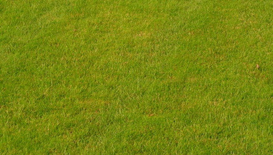 Yellow grass may be caused by a variety of factors.
