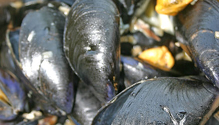 Farming mussels for your own consumption requires little skill.