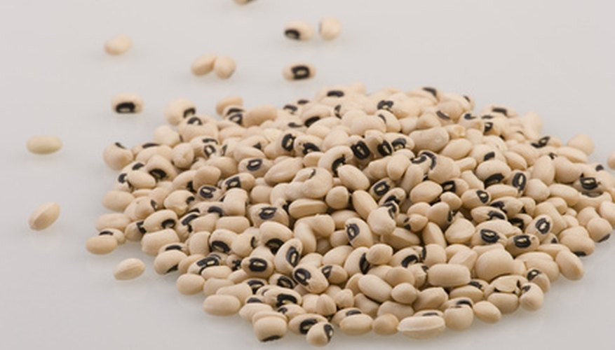 Black-eyed beans are an important addition to your new bean weevil culture.