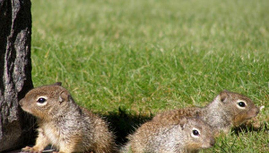 All squirrels look alike regardless of their gender.