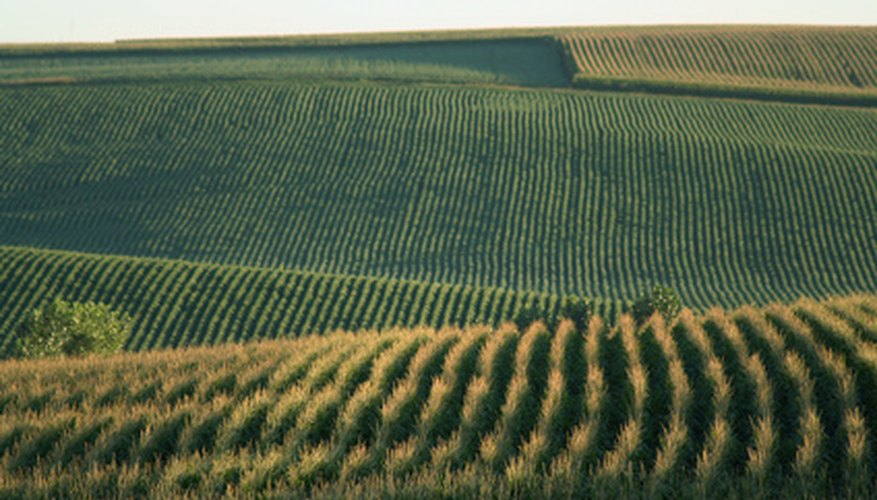 You can paint cornfields with a variety of red and yellow colours.