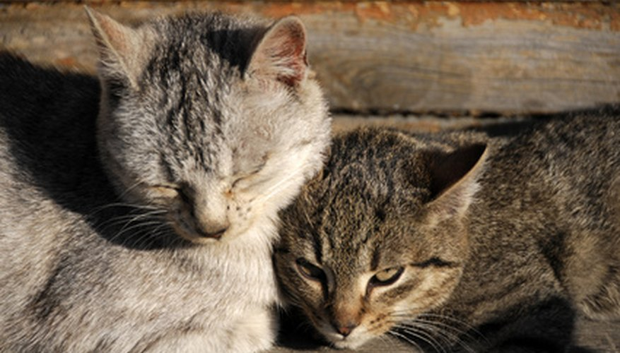 Feliway can be used to help new cat roommates become acclimated to each other.