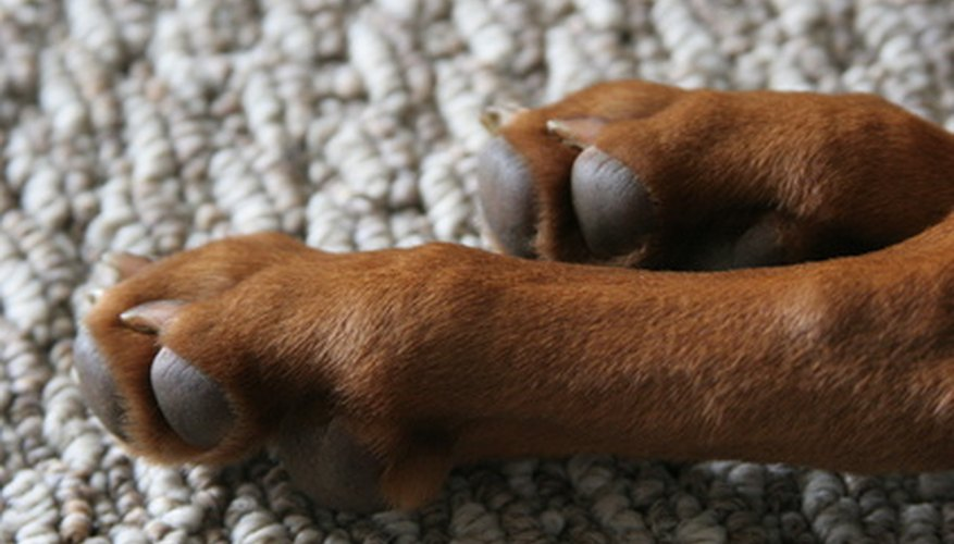 Pink fur stains are often times found on the dog's feet.