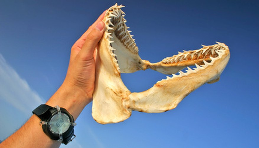 Once the jaws are cleaned, you can mount them.