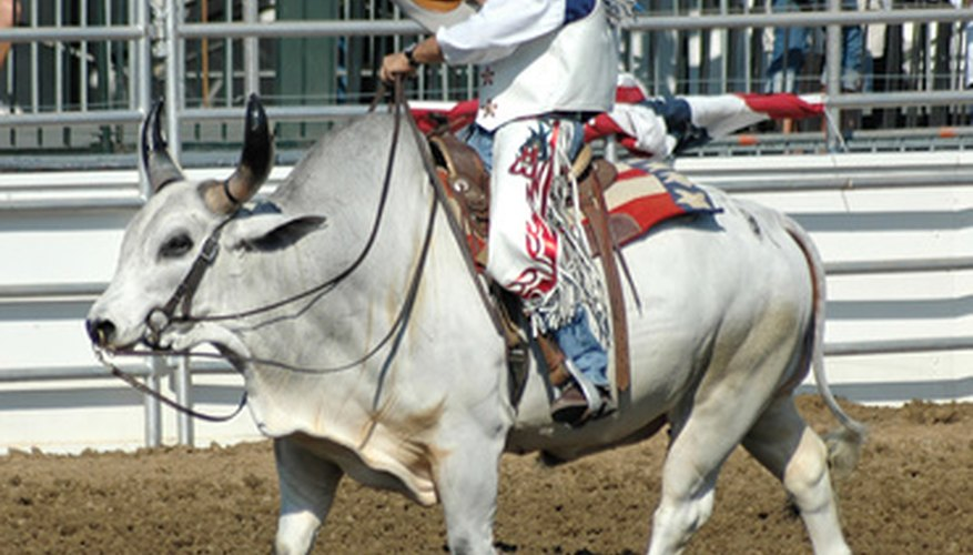 There are various bull riding schools across the nation.