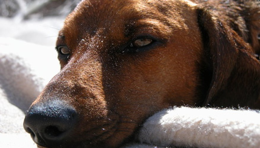 Diclofenac is used to treat canine inflammations of the eye.