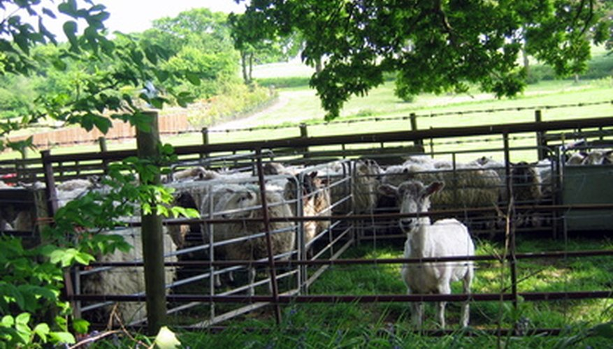 Use higher fences and barbed wire to stop sheep from jumping the fence.