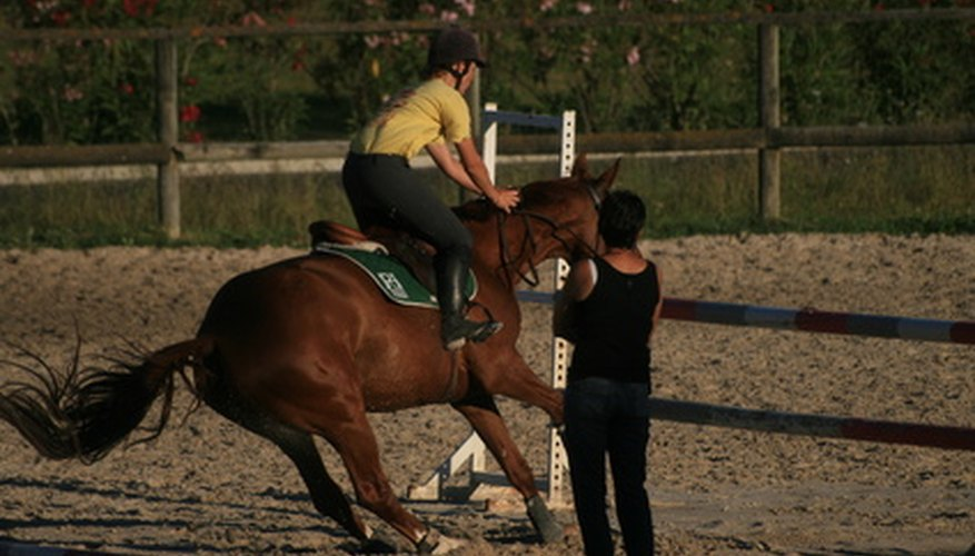 A horse needs well-developed chest muscles to perform consistently.
