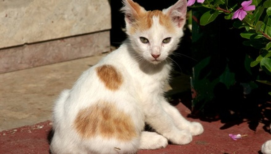 Cats, especially kittens, are prone to colic.