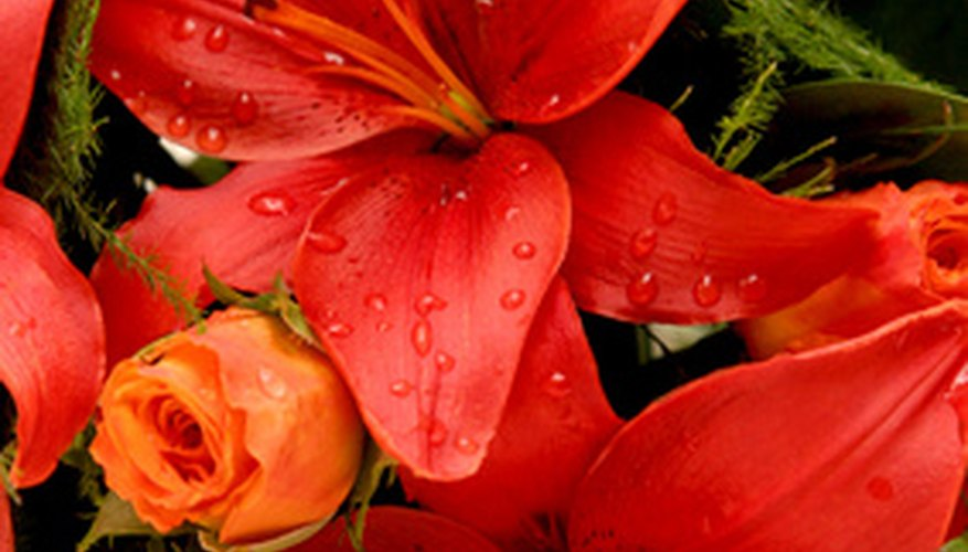 Lilies come in a variety of colours.